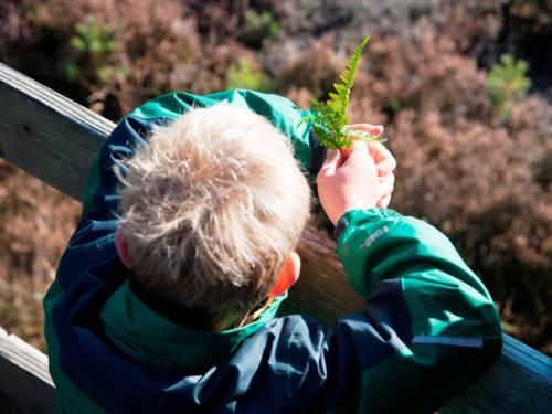 Kind mit einem Teil eines Farnblattes in der Hand an ein Holzgeländer gelehnt, die Landschaft betrachtend
