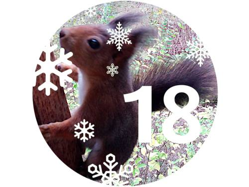Ein Eichhörnchen klettert eine Metallstange empor.