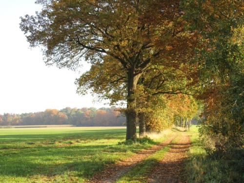 Bäume wachsen an einem Feldweg.