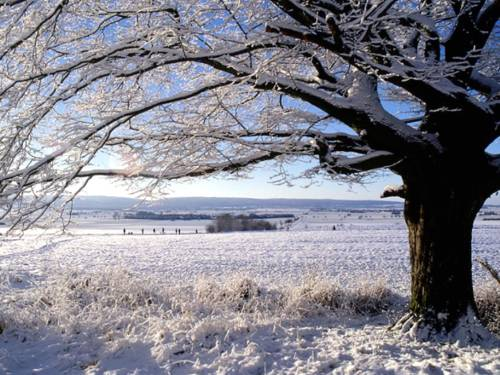 Ein Baum ist mit Schnee bedeckt, dahinter ist eine hügelige Winterlandschaft.