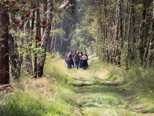 Eine Gruppe geht durch ein Moor, am Wegesrand wachsen Birken.