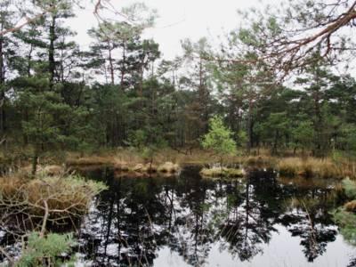 Um einen kleinen See stehen Nadelbäume, auf einer kleinen Insel wächst ein einzelner Laubbaum.