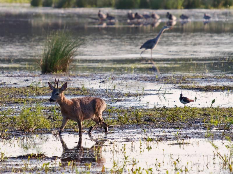 Wildtiere in den Meerbruchwiesen.