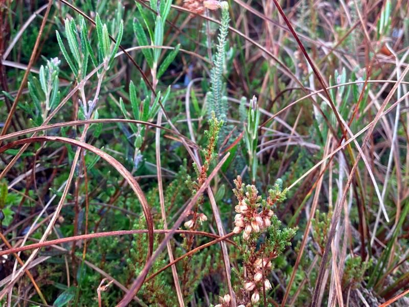 Verschiedene krautige Pflanzen, auch mit Blütenstand.