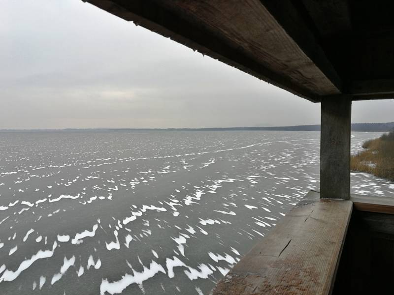 Blick vom Winzlarer Aussichtsturm auf das Steinhuder Meer.