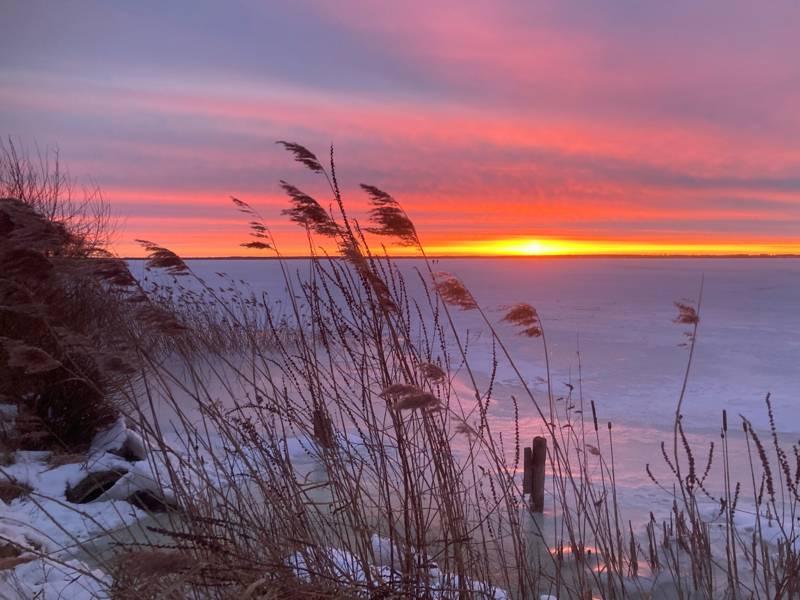 Die aufgehende Sonne taucht die verschneite Landschaft am Steinhuder Meer in rote und rosige Farben.