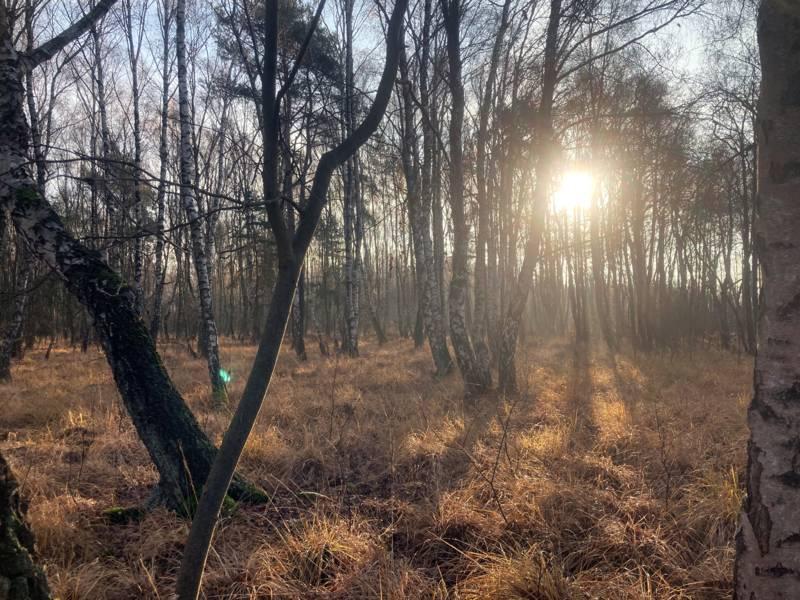 Die Sonne scheint durch Bäume hindurch auf eine Moorlandschaft