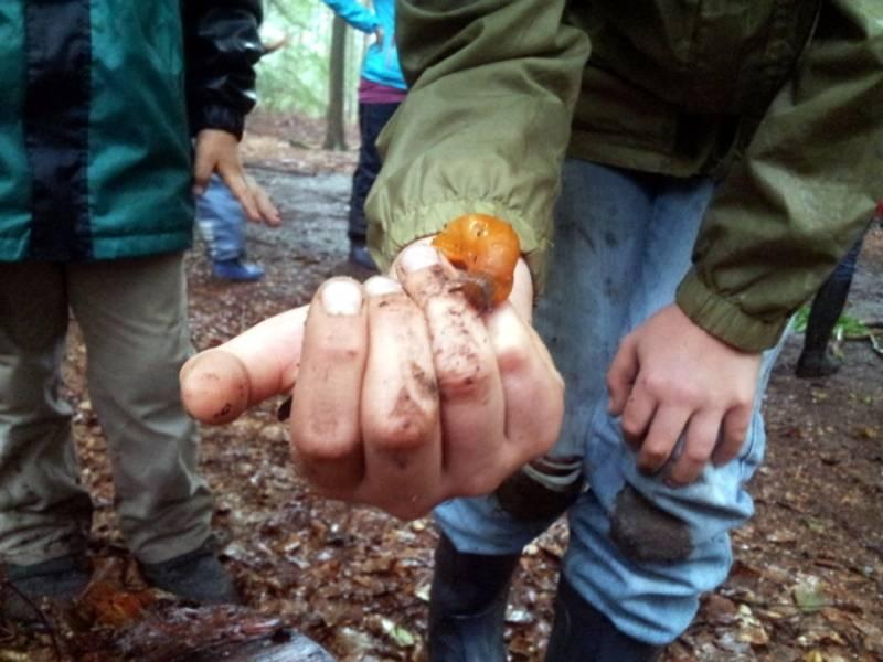 Eine hellbraune Schnecke kriecht über die Hand eines Kindes.