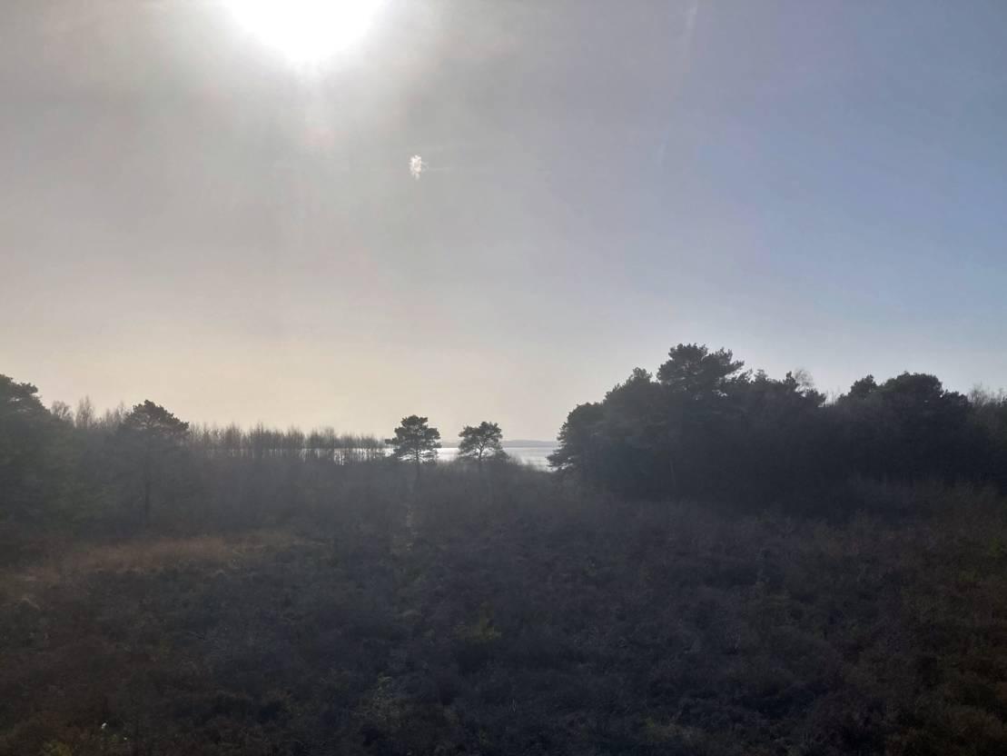 Ausblick auf das Steinhuder Meer.