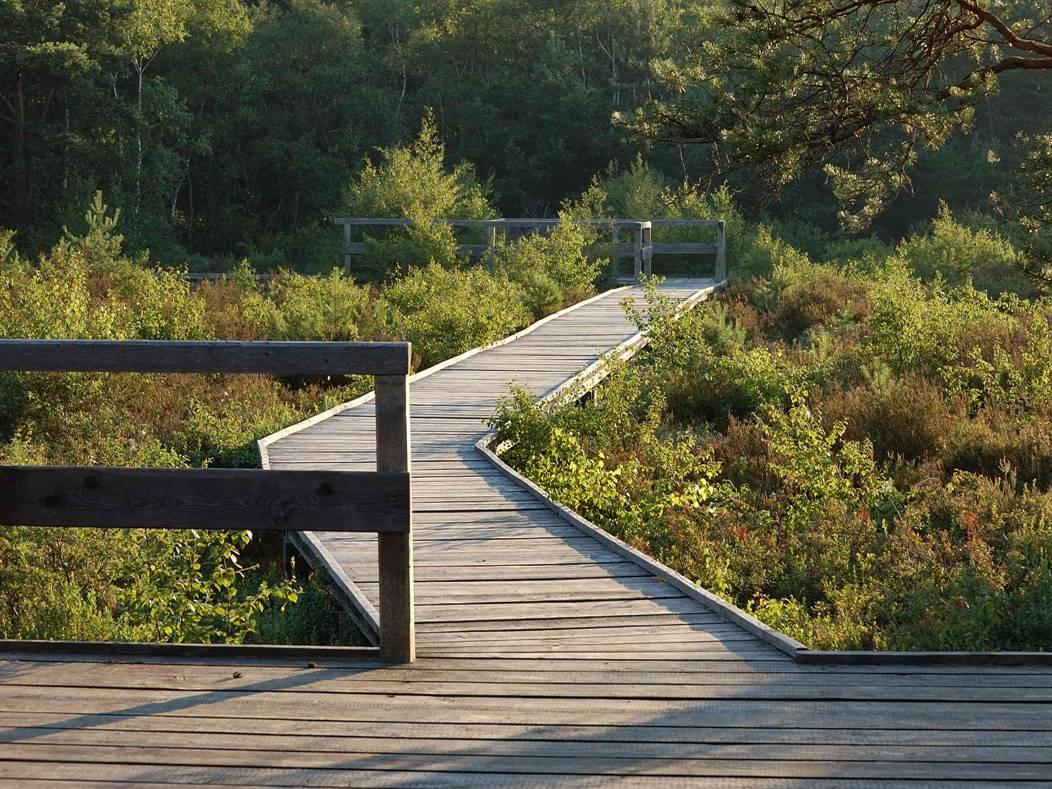 Ein Weg aus Holz führt über ein Moor hinweg.
