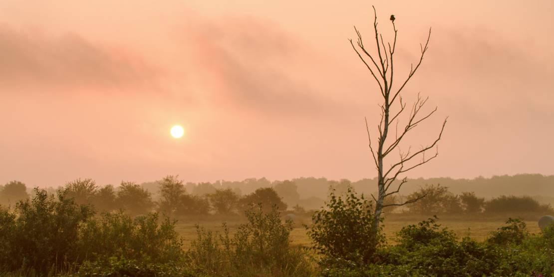 Die Sonne geht über einer Wiesenlandschaft auf.