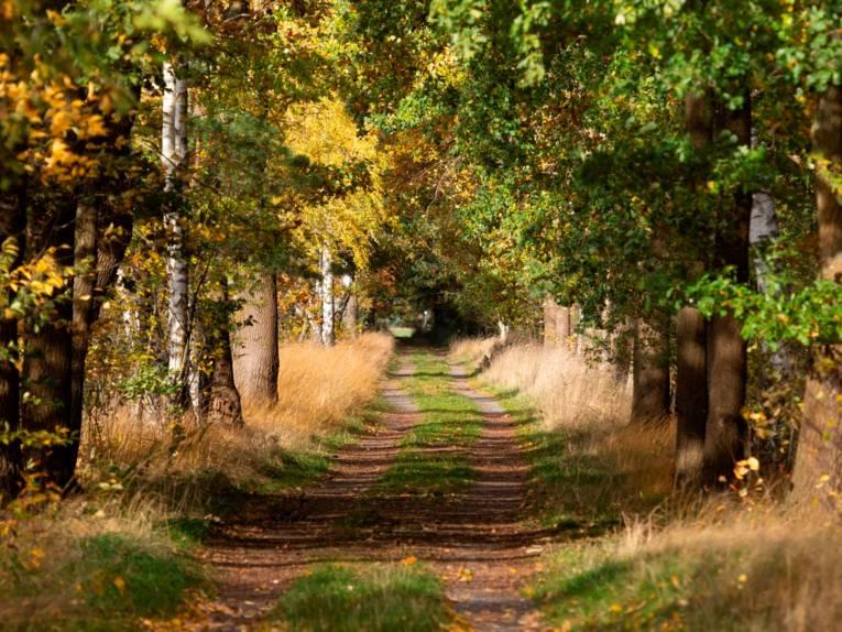 Weg durch einen Wald: Links und rechts der beiden Fahrspuren wachsen Bäume.
