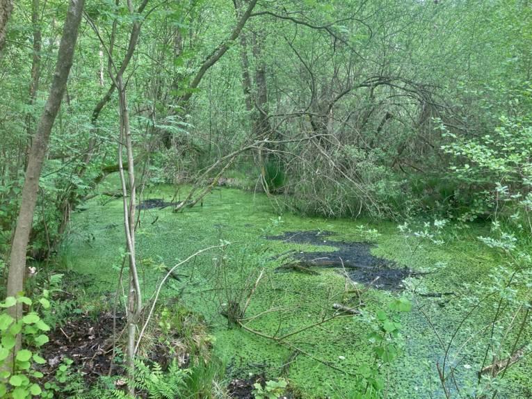 Nasses, sumpfiges Gebiet mit wilder Vegetation.
