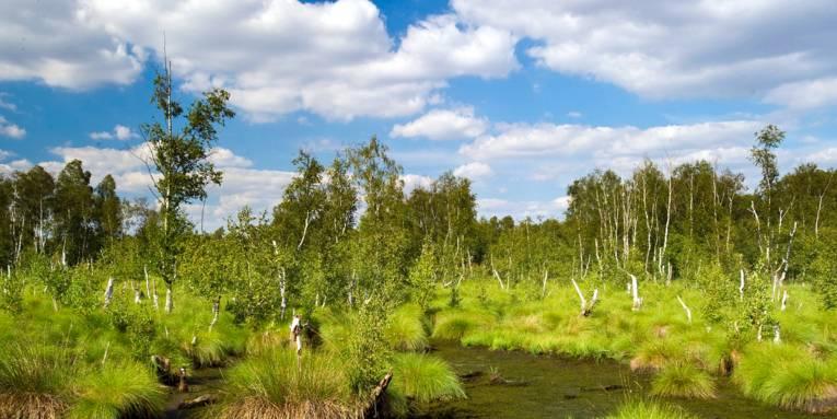 Moorlandschaft und blauer Himmel
