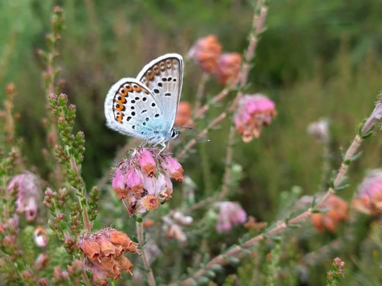 Schmetterling auf einer Blüte