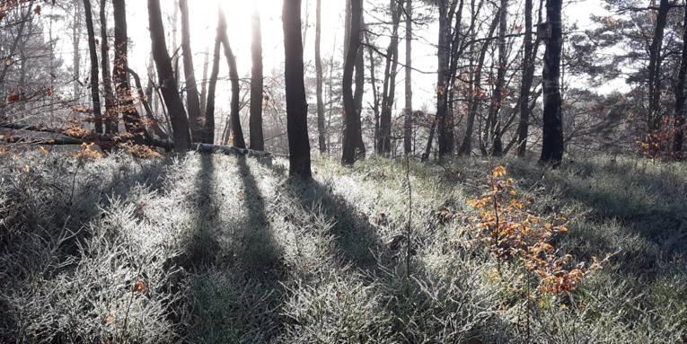 Gräser und Bäume sind von Raureif überzogen, im Spiel mit der Sonne im Gegenlicht entstehen interessante Schatten und Kontraste.