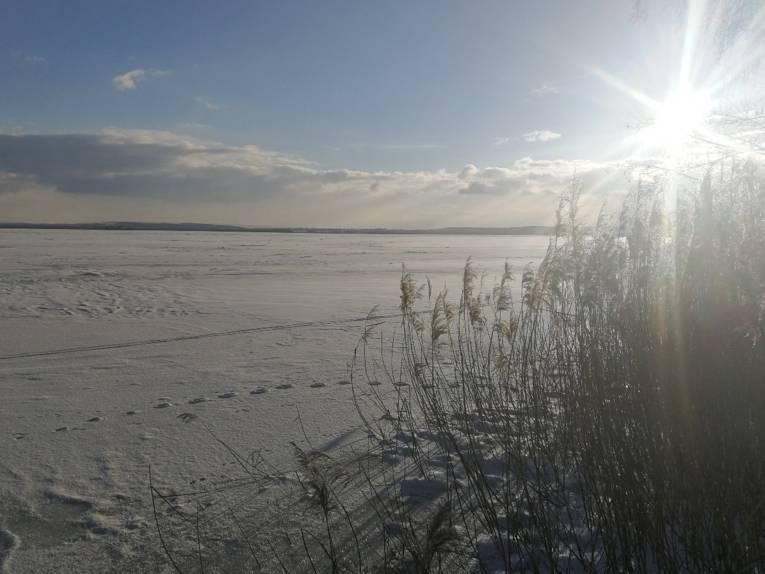 Die Sonne blitzt zwischen Uferbewuchs hervor, die Umgebung ist verschneit.