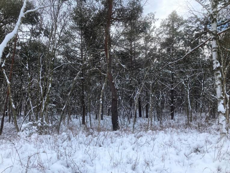 Schnee liegt auf den Ästen von Bäumen, die Umgebung rundherum ist auch von Schnee bedeckt.