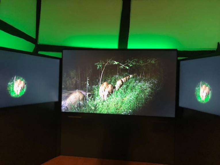 Aufnahmen aus Fotofallen an drei großen Bildschirmen