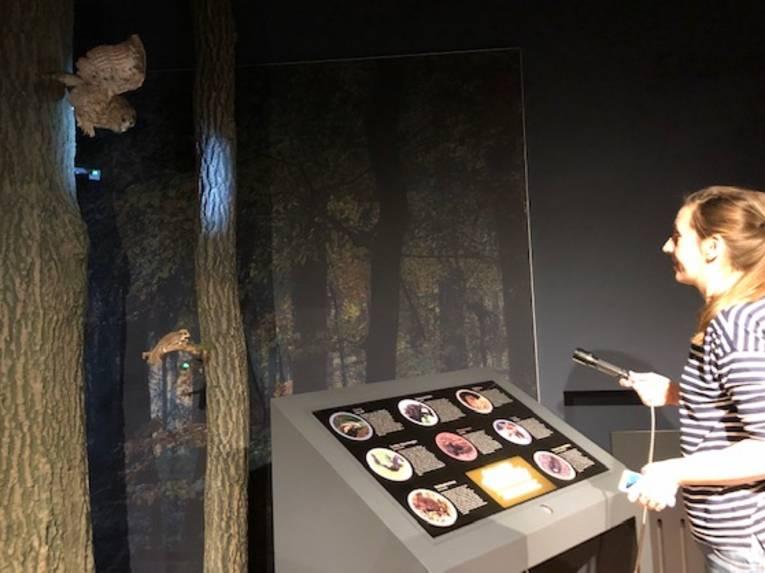 """Eine Besucherin leuchtet mit einer Taschenlampe in den Ausstellungsbereich """"Nachtwald"""" in der Infoscheune Steinhude und sucht nacht Tieren."""