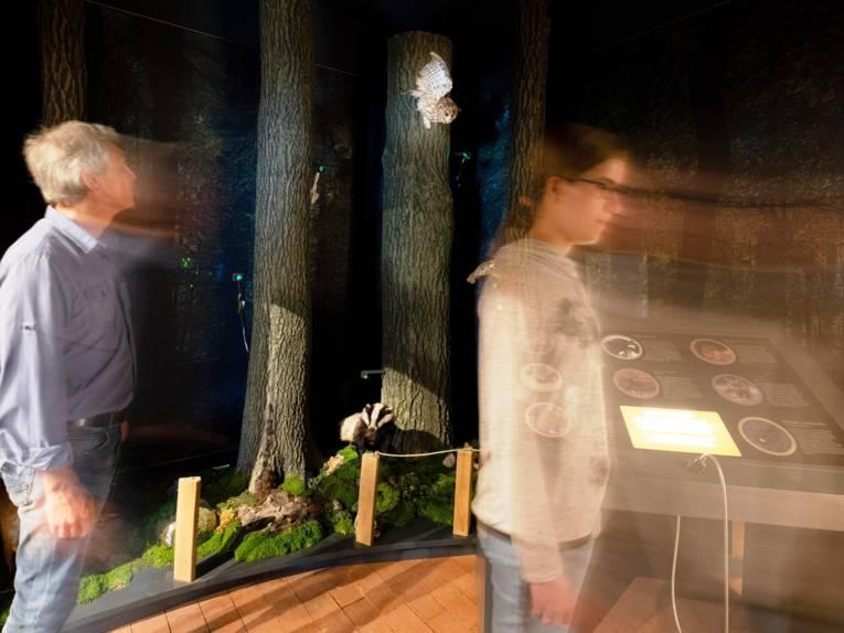 Eine Besucherin und ein Besucher schauen sich im Nachtwald um.