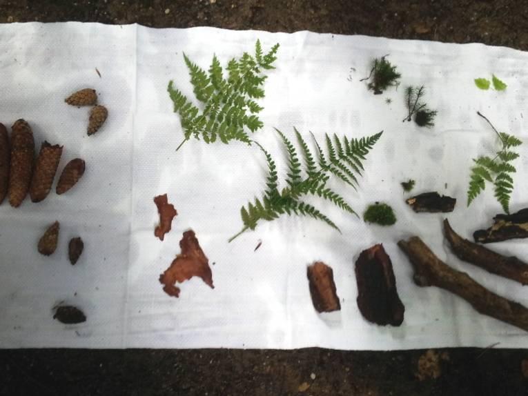 Teile von Pflanzen liegen auf einem weißen Tuch.