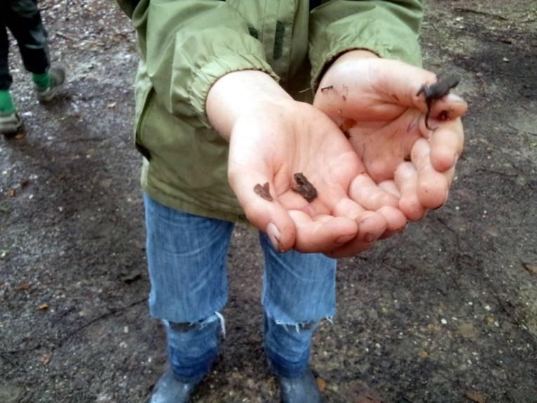 Auf den geöffneten Händen eines Kindes krabbeln drei kleine Kröten.