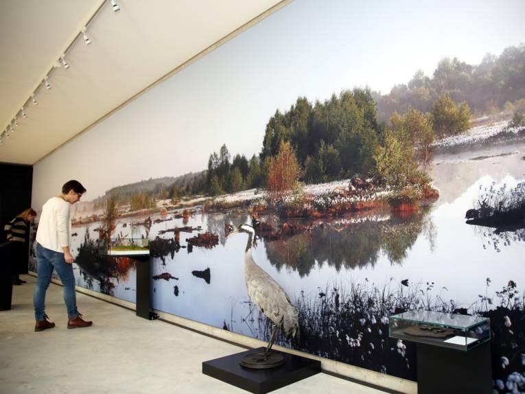 Eine Besucherin schaut auf ein Ausstellungsstück im Naturparkhaus Steinhuder Meer.