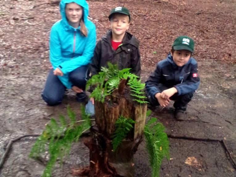 Drei Kinder sitzen hinter einem Arrangement aus verschiedenen Baumstümpfen.