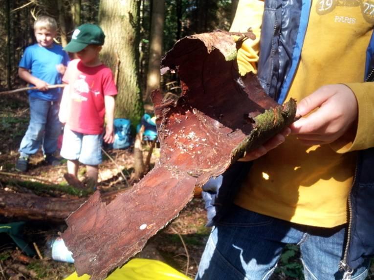 Ein Kind hält ein großes Stück Baumrinde in den Händen.