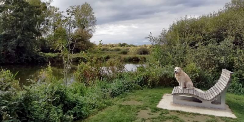 Ein Hund der Rasse Golden Retriever an einem Gewässer auf einer fest installierten Entspannungsliege.