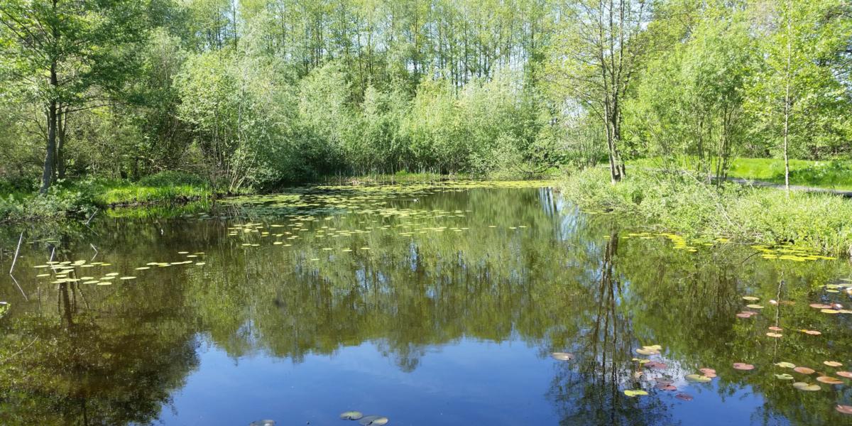 Wasserfläche mit Seerosen, Drumherum wachsen Bäume und Sträucher.